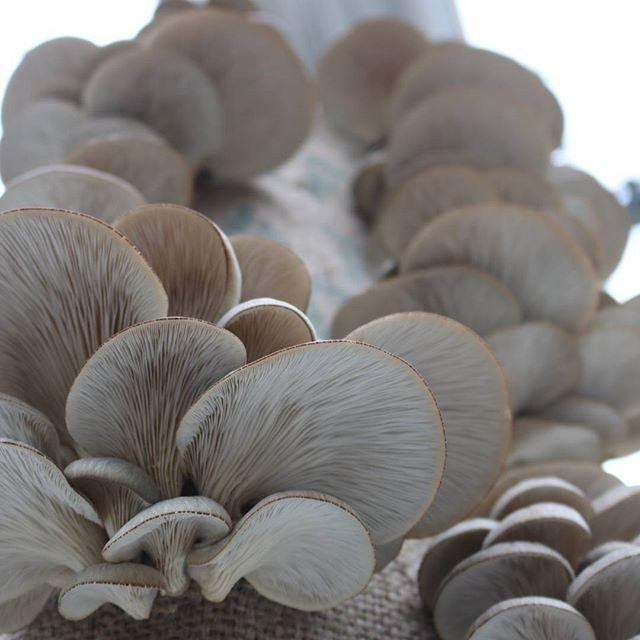champignons en ville