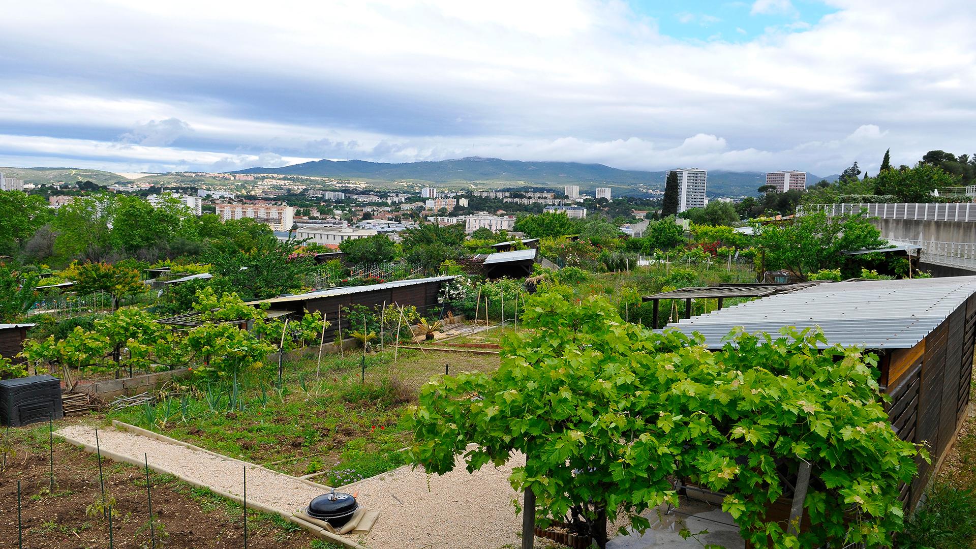Un Plan d'Action Métropolitain en faveur de l'agriculture urbaine